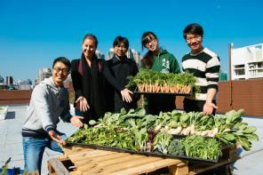 HKU 2013 Winter Harvest
