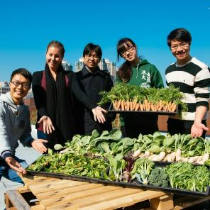 HKU 2013 Winter Harvest