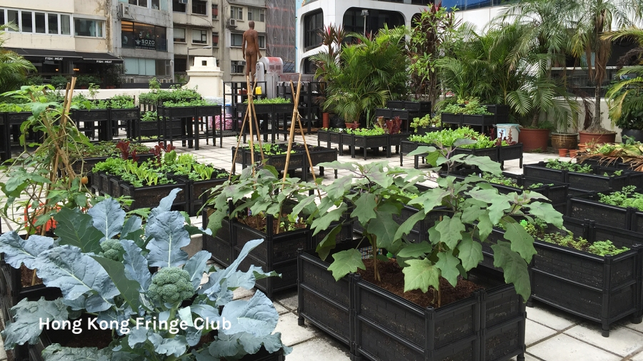 Rooftop farm at Fringe Club
