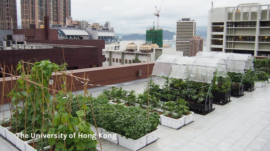 Rooftop farm at HKU