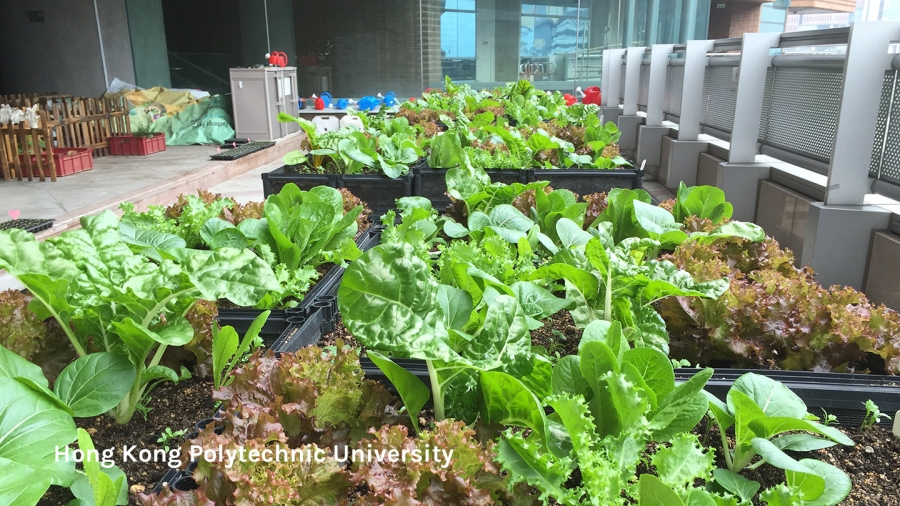 Urban farm at PolyU