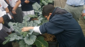 Confucius Hall Secondary School / Science and Urban Farming / Spring 2014