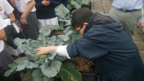 Confucius Hall Secondary School / Science and Urban Farming / Spring 2014