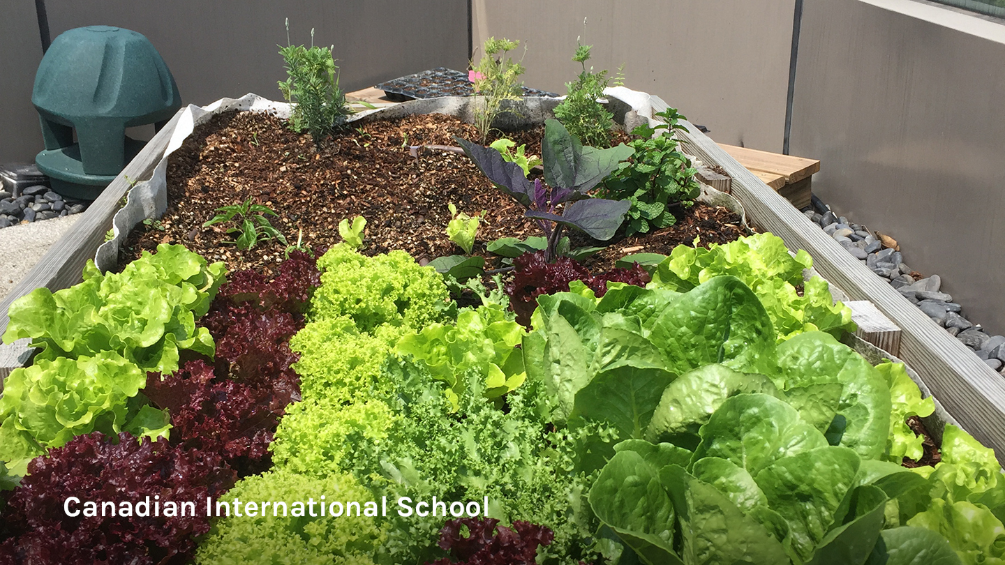 Urban farm at Canadian International School