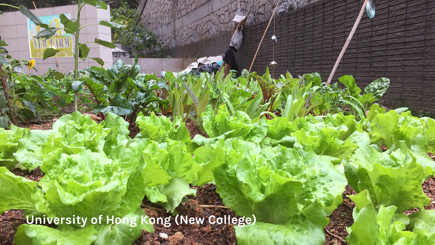 Urban farm at the University of Hong Kong (New College)