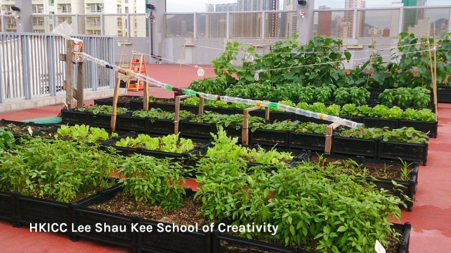 Rooftop farm at HKICC Lee Shau Kee School of Creativity