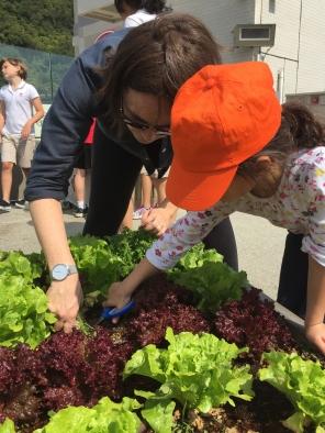 Urban Farming / Spring 2017