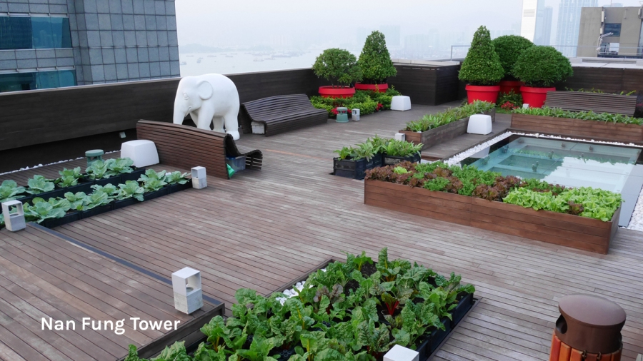 Roofotp farm at Nan Fung Tower